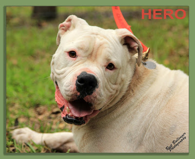 Hero one of our beloved dogs at Forget-Me-Not Inc. and his difficult story.