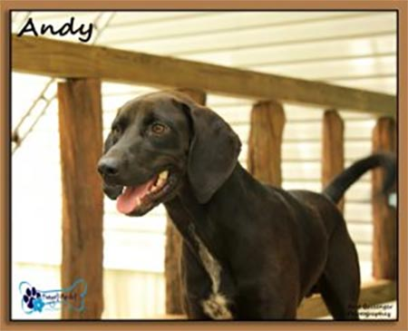 Andy, one of our special need dogs who can't be adopted out but is lovingly cared for by Forget-Me-Not Inc..